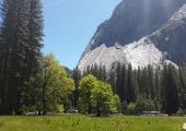 CA Nature